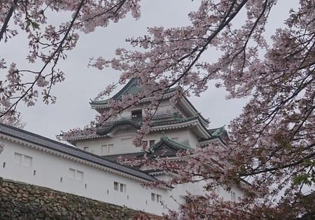 2和歌山城700_0450.jpg